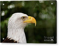 America The Great Acrylic Print