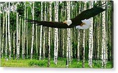 American Bald Eagle, Hunting, Cutthroat River Basin, Colorado Acrylic Print