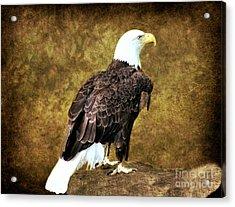 American Bald Eagle Acrylic Print by Judy Palkimas