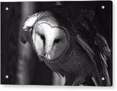 American Barn Owl Monochrome Acrylic Print