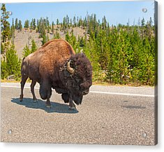Acrylic Print featuring the photograph American Bison Sharing The Road In Yellowstone by John M Bailey