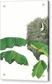 American Buffalo 1 Acrylic Print