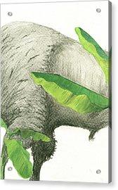 American Buffalo 2 Acrylic Print