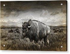 American Buffalo In The Grand Tetons Acrylic Print by Randall Nyhof