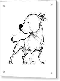 American Bulldog Gesture Sketch Acrylic Print