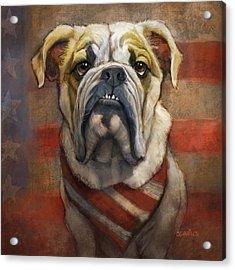 American Bulldog Acrylic Print by Sean ODaniels