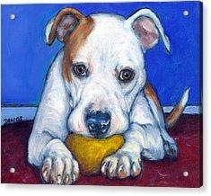 American Bulldog With Yellow Ball Acrylic Print by Dottie Dracos