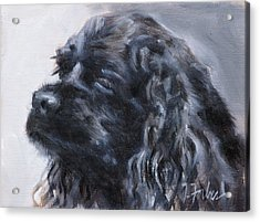 American Cocker Spaniel Acrylic Print by Isabel Forbes