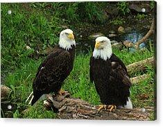 American Eagles Acrylic Print