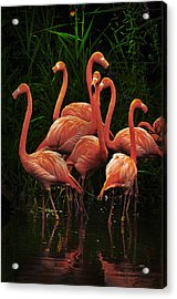Acrylic Print featuring the photograph American Flamingo by Michael Cummings
