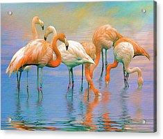 American Flamingos Acrylic Print