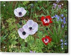 American Flowers Acrylic Print