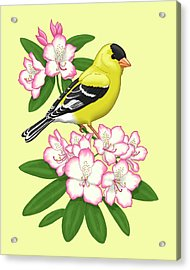 American Goldfinch And Coast Rhododendron Acrylic Print