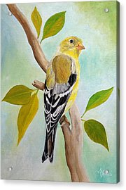 Pretty American Goldfinch Acrylic Print