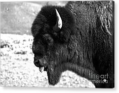 American Icon Portrait Black And White Acrylic Print by Adam Jewell