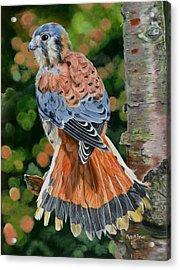 American Kestrel In My Garden Acrylic Print