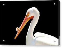 American Pelican Acrylic Print by Jeannie Burleson
