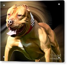 American Red Bully Pitbull By Spano Acrylic Print by Michael Spano