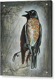 Acrylic Print featuring the mixed media American Robin by Sheri Howe