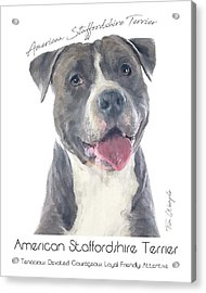 American Staffordshire Terrier Poster 2 Acrylic Print by Tim Wemple