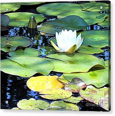 American Water Lilies Four Acrylic Print by J Jaiam