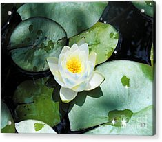 American Water Lilies Acrylic Print by J Jaiam