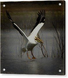 American White Pelican Da Square Acrylic Print by Ernie Echols
