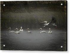American White Pelicans Da Acrylic Print by Ernie Echols
