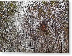 American Woodcock In October Foliage Acrylic Print