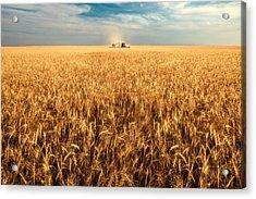 America's Breadbasket Acrylic Print by Todd Klassy