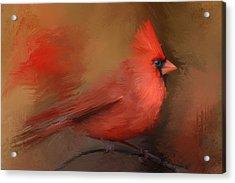 America's Favorite Red Bird Acrylic Print by Jai Johnson