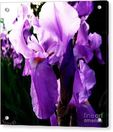 Amethyst  Acrylic Print by September  Stone