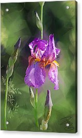Amethyst Iris 2 Acrylic Print