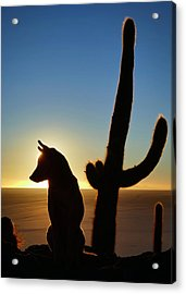 Acrylic Print featuring the photograph Amigo by Skip Hunt