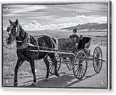 Amish Buggy Driver Acrylic Print by John Bartelt