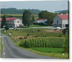 Amish Country Road Acrylic Print