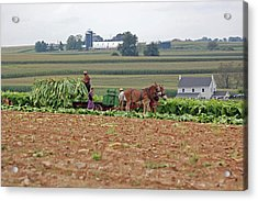 Amish Farm Harvest Acrylic Print by Joyce Huhra