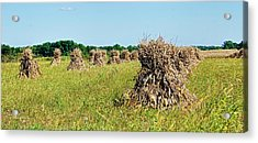 Acrylic Print featuring the photograph Amish Harvest by Cricket Hackmann