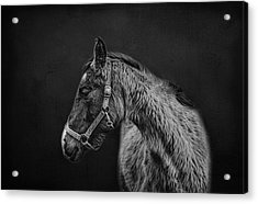 Amish Horse Portrait Acrylic Print by SharaLee Art