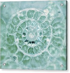 Acrylic Print featuring the photograph Ammonite Emerald Green by Gigi Ebert