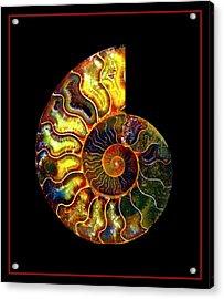 Ammonite Fossil - 8322-3 Acrylic Print