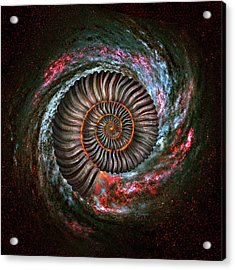 Ammonite Galaxy Acrylic Print by Jerry LoFaro