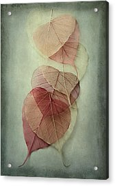 Among Shades Acrylic Print