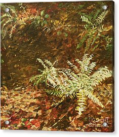 Among The Leaves Acrylic Print by Carla Dabney