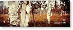 Among The Tall Grass Acrylic Print