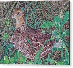 Among The Thistles Acrylic Print
