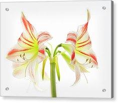 Amorice Acrylic Print