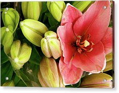 Acrylic Print featuring the photograph Amsterdam Buds by KG Thienemann