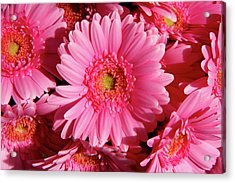 Acrylic Print featuring the photograph Amsterdam In Pink by KG Thienemann