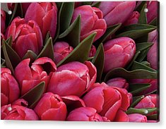 Amsterdam Red Tulips Acrylic Print by Jill Smith